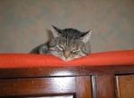 titounette chat provenant de
