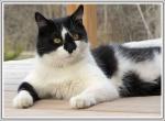 Gribouille adorable chat provenant de